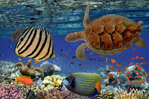 Póster Coral Reef and Tropical Fish iin the Red Sea, Egypt