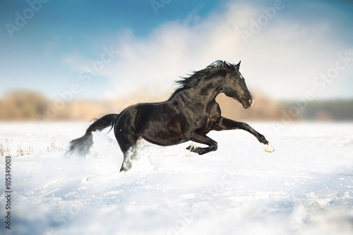 Obraz Fotograficzny Black horse run in the snow