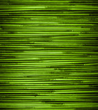 Green bamboo texture with natural patterns, close up.