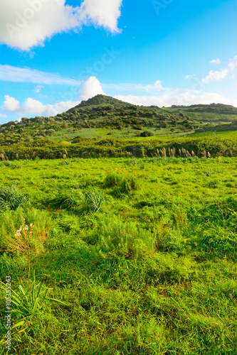 Keuken foto achterwand Nieuw Zeeland soft clouds over a green hill
