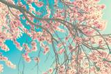Fototapety Spring blossom