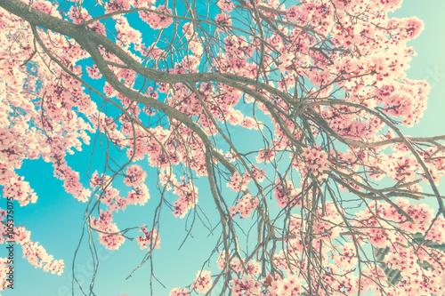 Zdjęcia na płótnie, fototapety na wymiar, obrazy na ścianę : Spring blossom