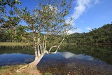 Cuba nature - Terrazas biosphere reserve