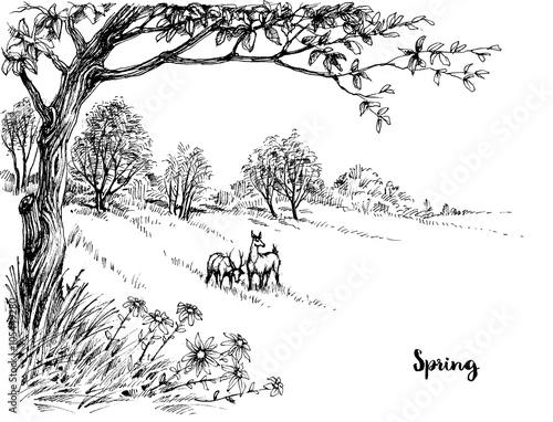 Naklejka Spring in the woods sketch