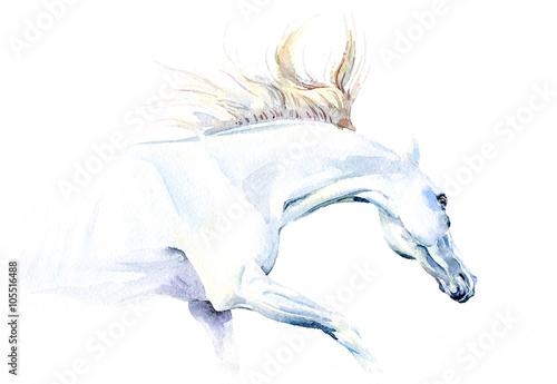 Juliste White horse in watercolor