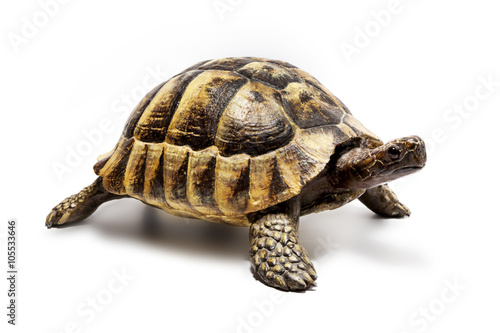 Poster Schildkröte