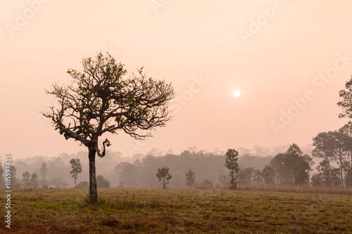Silhouette of tree with sunrise and morning mist © Kittiphan