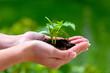 Leinwanddruck Bild - Frau hält Pflanze in der Hand