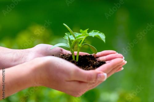 Fotobehang Planten Frau hält Pflanze in der Hand