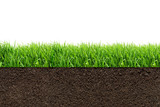 green grass with in soil isolated on white background - 105697491