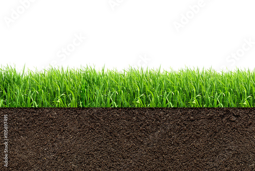 Poster Gras green grass with in soil isolated on white background