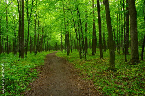 obraz PCV green forest