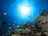 沖縄の海 小魚戯れるサンゴ礁