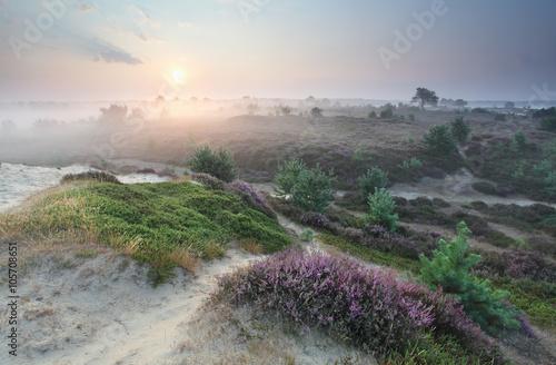 flowering summer meadows at sunrise - 105708651