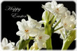 Ziva Paperwhites Flowers Happy Easter Greeting Card