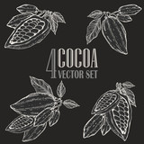 Fototapety Hand painted cocoa botany illustration set. Blackboard doodles of healthy nutrient food.