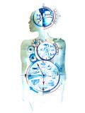 biological clock - 105766481