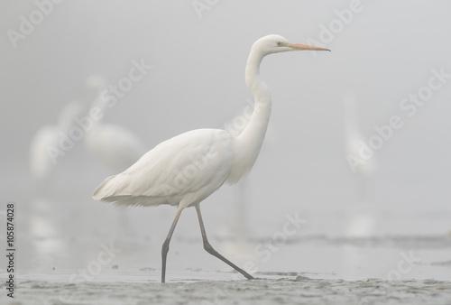 biała w bieli - 105874028