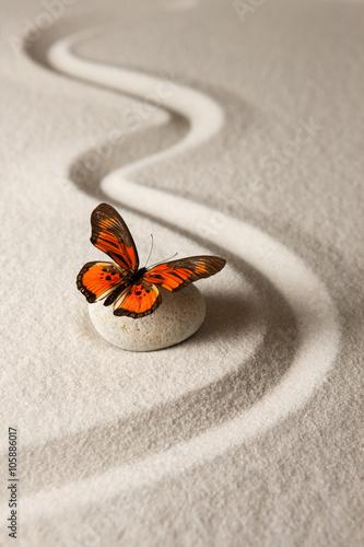 Motyl zen