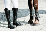 Fototapety équitation jambes pied pattes cheval cavalier botte
