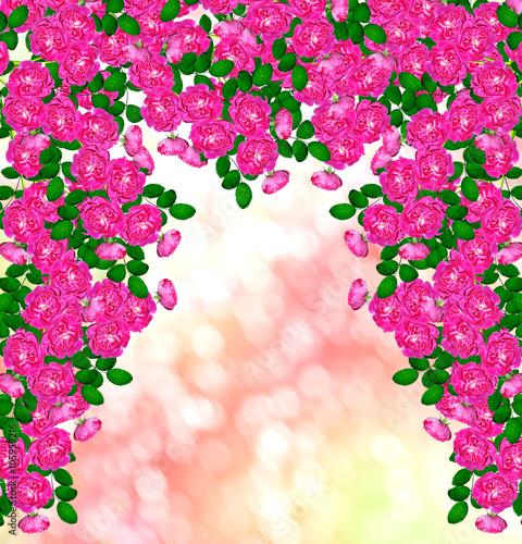 Plexiglas Roze Delicate wild rose garden flowers