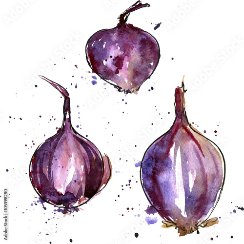 vector watercolor purple onions плакат