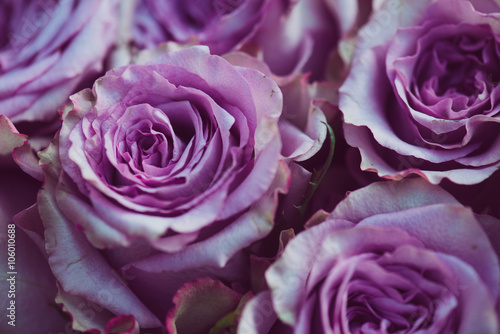Purple rose flower bouquet vintage background, close up of wedding bouquet