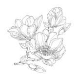 Stem with ornate magnolia flower, buds and leaves isolated on white background. Floral elements in contour style.
