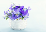 Bouquet of violet pansies - 106088447