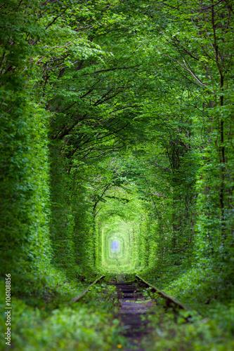 Cud natury - prawdziwy tunel miłości, zielone drzewa