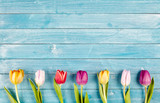Fototapety Border of fresh multicolored spring tulips