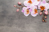 Fototapety Spa orchid theme objects on grey background.