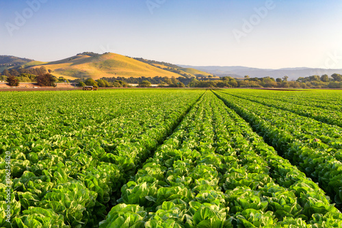 Plakat Salinas Valley Lettuce Field