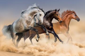 Horse herd run in clouds of dust