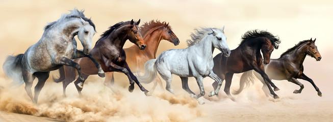 Panorama koni
