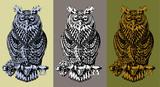 Fototapety Owl