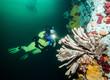 Scuba diving in British Columbia