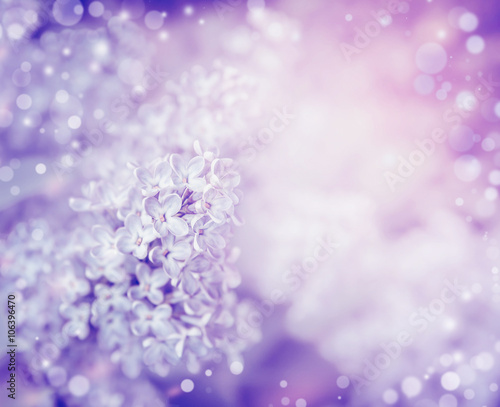 Beautiful flowers of lilac , close up. Lilac blooming background. Light pastel floral border