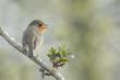 Bird mating