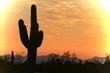 beautiful sky over the desert