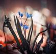 blue spring season wild forest flowers closeup