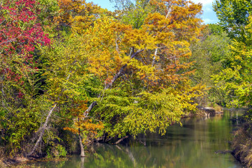 Texas Fall Colors #2