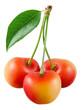 Cherry. Three yellow berries isolated on white.
