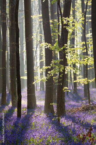 spring sunny forest with many flowers © Olha Rohulya