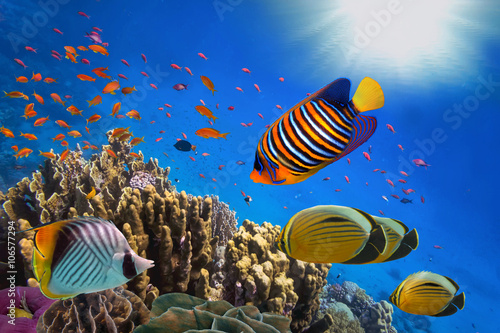Pinturas sobre lienzo Coral Reef and Tropical Fish in Sunlight