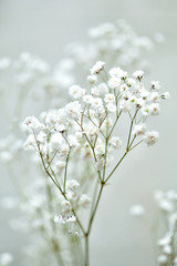 the small white flowers of gypsophila. wedding style