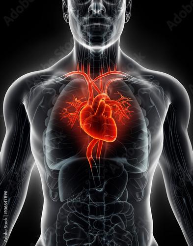 Zdjęcia na płótnie, fototapety, obrazy : 3D illustration Human Internal Organic - Human Heart.