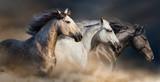 Konie z długim portretem grzywa biegają galopem w pustynnym kurzu