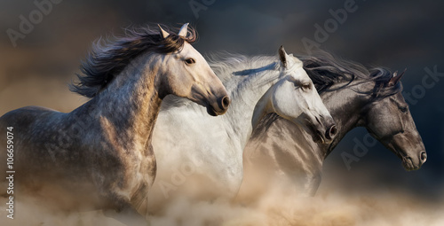 obraz PCV Horses with long mane portrait run gallop in desert dust