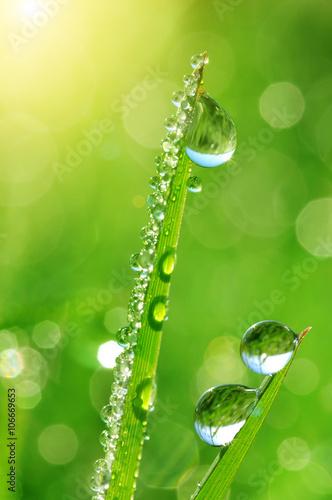swieza-zielona-trawa-z-woda-opuszcza-zblizenie-natura